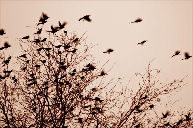 Fly fly away little birds