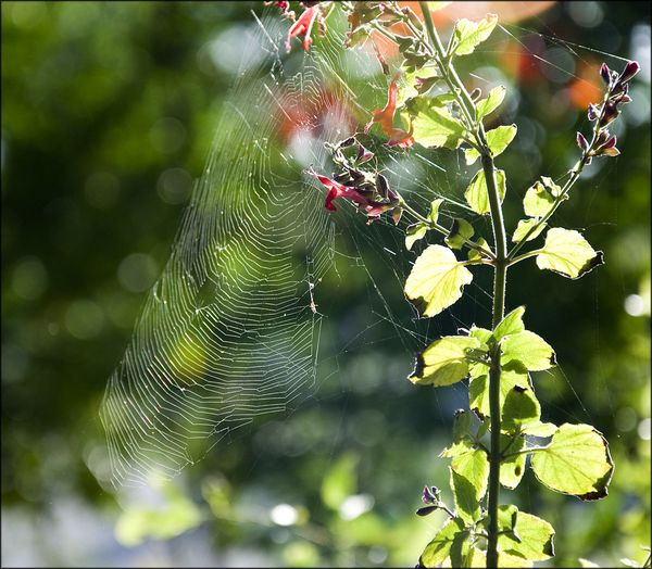 Web and light